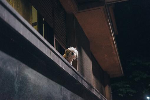 Solitude「Small dog sitting on window sill」:スマホ壁紙(13)