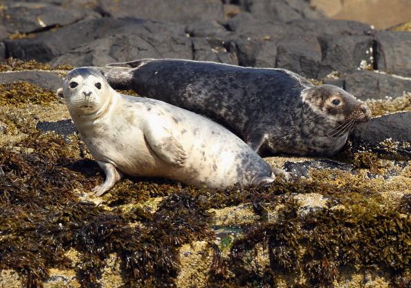 Aquatic Mammal「Visitors Enjoy The Wildlife At The Farne Islands」:写真・画像(9)[壁紙.com]