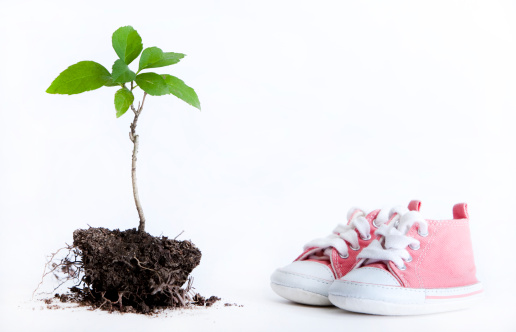 Planting「tree seedling and baby shoes」:スマホ壁紙(1)