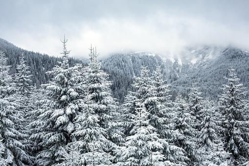 Winter Solstice「Snowy mountain forest」:スマホ壁紙(18)