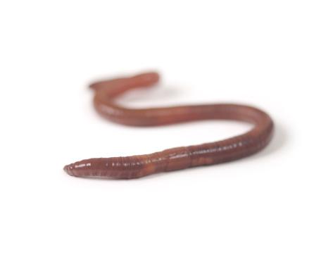 Crawling「Earthworm」:スマホ壁紙(18)