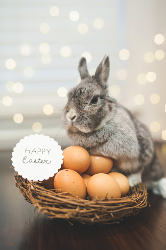 Baby Rabbit「Bunny rabbit watching over basket of Easter eggs」:スマホ壁紙(5)