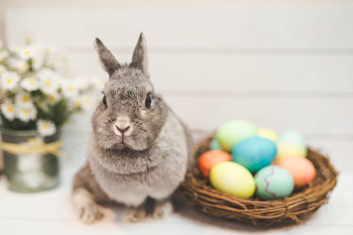 Baby Rabbit「Bunny rabbit watching over basket of Easter eggs」:スマホ壁紙(13)