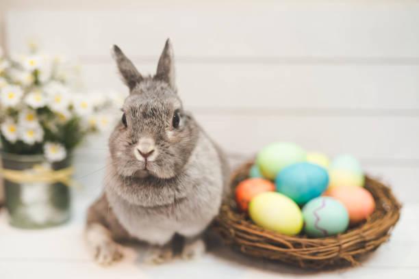 Bunny rabbit watching over basket of Easter eggs:スマホ壁紙(壁紙.com)
