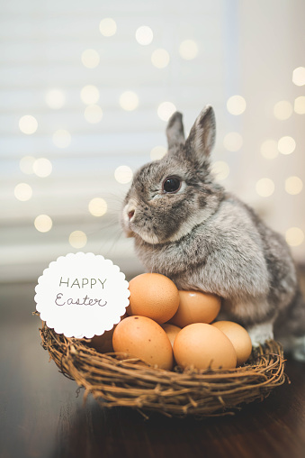 Baby Rabbit「Bunny rabbit watching over basket of Easter eggs」:スマホ壁紙(17)