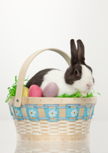 Baby Rabbit「Bunny Rabbit Easter Basket」:スマホ壁紙(16)