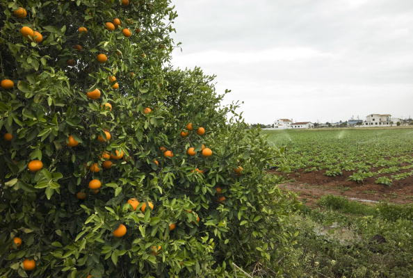 Grove「Ammochosto, Cyprus」:写真・画像(13)[壁紙.com]