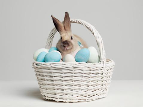 Rabbit「Rabbit amongst coloured eggs in basket, studio shot」:スマホ壁紙(1)
