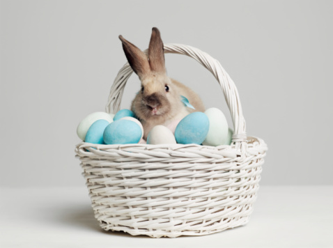 Easter Bunny「Rabbit amongst coloured eggs in basket, studio shot」:スマホ壁紙(0)