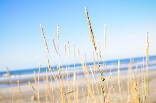 New Zealand「Beach Fresh」:スマホ壁紙(10)