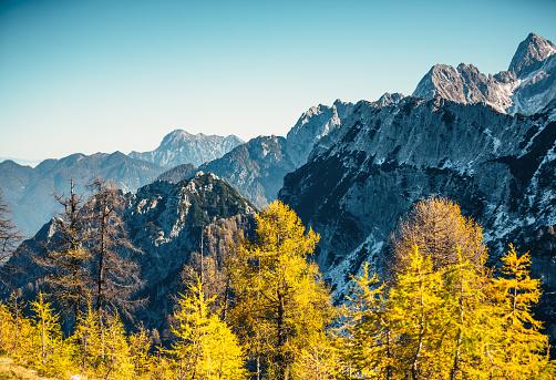 落葉樹「秋の山々」:スマホ壁紙(18)