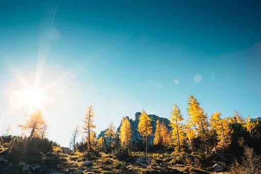 落葉樹「秋の山々」:スマホ壁紙(13)