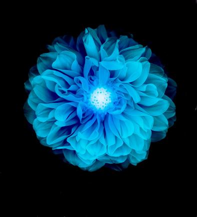 花「X-ray like image of a flower.」:スマホ壁紙(6)
