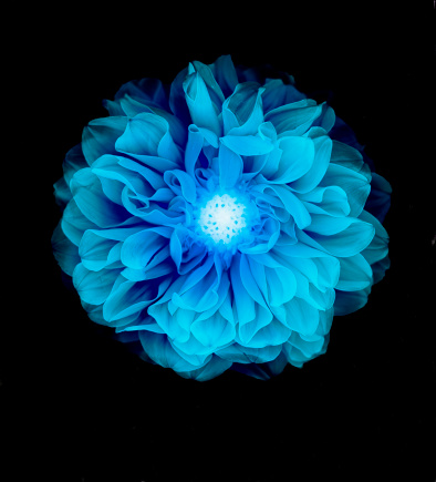 flower「X-ray like image of a flower.」:スマホ壁紙(18)