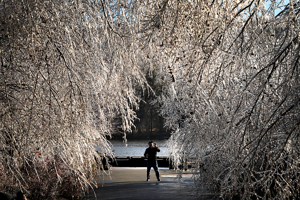 Tree「Winter Storm Brings Ice, Snow, And Rain Through Northeast」:写真・画像(12)[壁紙.com]