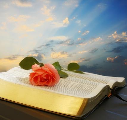 Sunbeam「Bible」:スマホ壁紙(9)