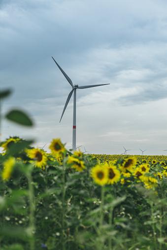 ひまわり「Sunflower field and wind farm」:スマホ壁紙(11)