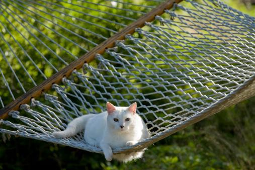 Hammock「White cat in hammock」:スマホ壁紙(15)