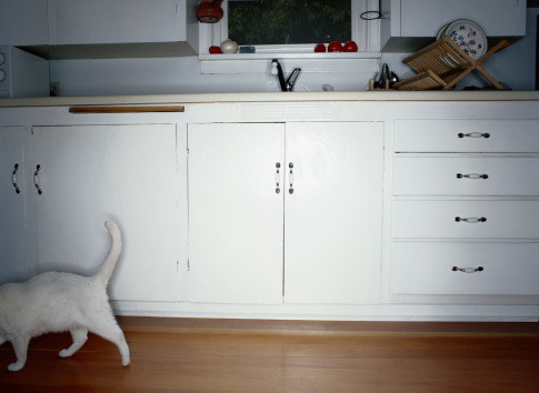 Mixed-Breed Cat「White Cat in Kitchen」:スマホ壁紙(3)