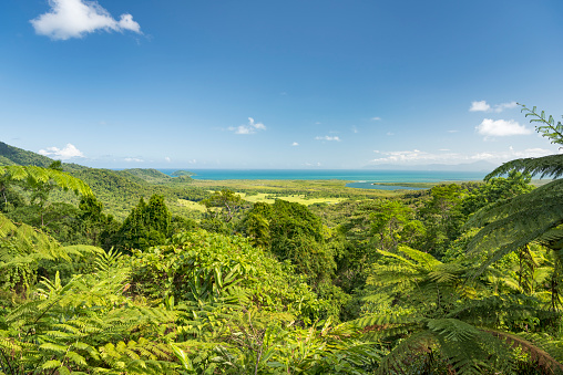 Rainforest「Walu Wugirriga Lookout, Daintree River National Park, Queensland, Australia」:スマホ壁紙(17)