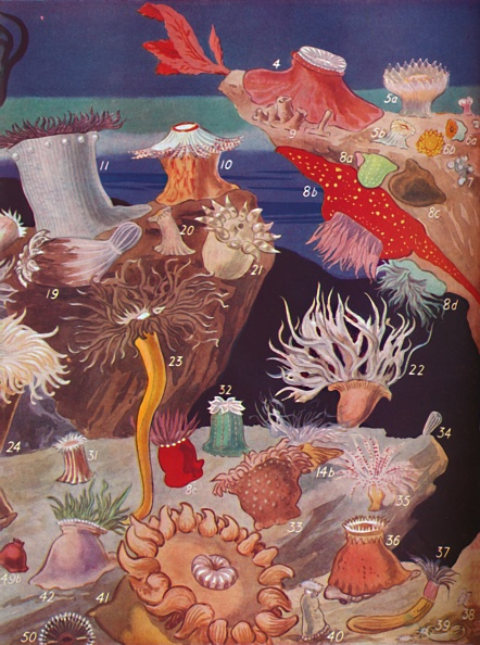 Animal Wildlife「Over Fifty Varieties Of Sea Anemones」:写真・画像(11)[壁紙.com]