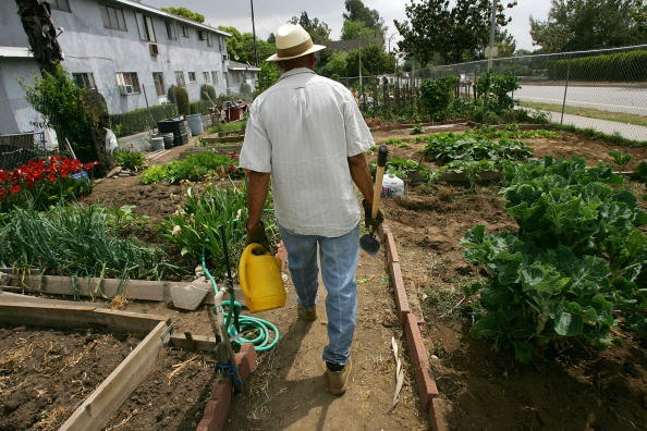 Environmental Conservation「Soaring Food Prices Prompt Renewed Interest In Gardening」:写真・画像(12)[壁紙.com]