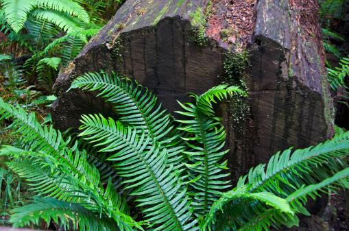 Fallen Tree「Macmillan Provincial Park」:スマホ壁紙(19)