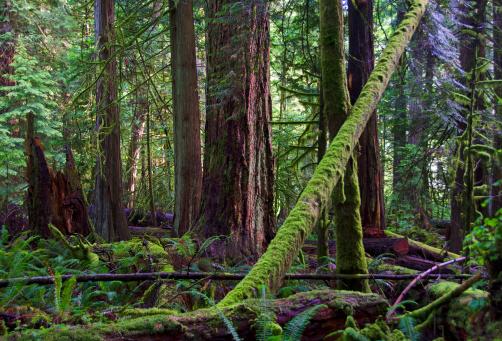 Fallen Tree「Macmillan Provincial Park」:スマホ壁紙(15)