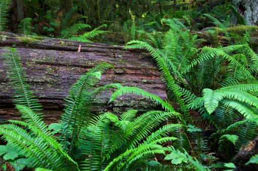 Fallen Tree「Macmillan Provincial Park」:スマホ壁紙(17)