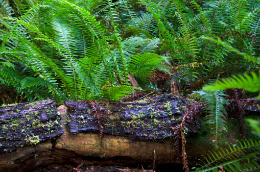 Fallen Tree「Macmillan Provincial Park」:スマホ壁紙(16)