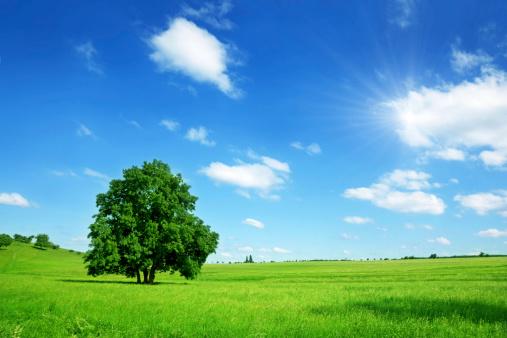 放牧地「晴れた夏の風景」:スマホ壁紙(17)