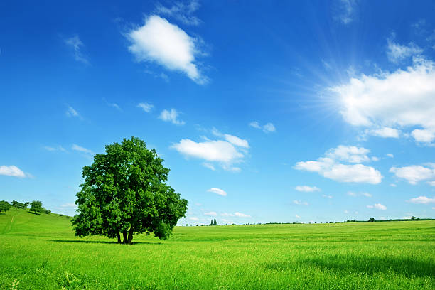 Sunny Summer Landscape:スマホ壁紙(壁紙.com)