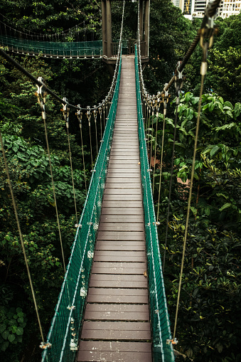 Elevated Walkway「Bridge at the Forest Eco Park in Kuala Lumpur」:スマホ壁紙(14)