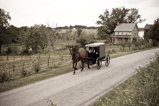 Horse「Amish Horse-drawn Buggy Lancaster County Pennsylvania」:スマホ壁紙(1)