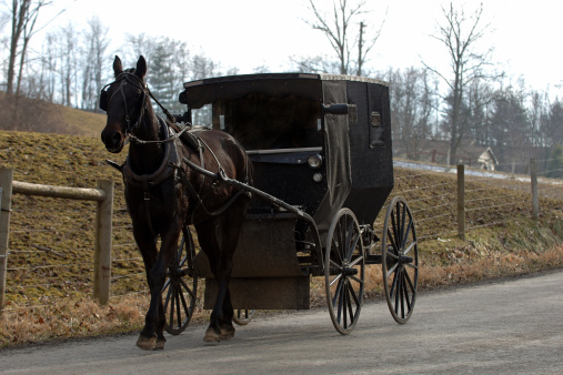Animal Harness「amish horse and buggy」:スマホ壁紙(6)