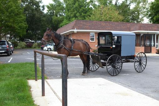 Horse-drawn carriage「アーミッシュのバギーの馬と駐車場」:スマホ壁紙(19)