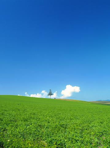 Kamikawa District - Ishikari「Grassland and tree in summer」:スマホ壁紙(9)
