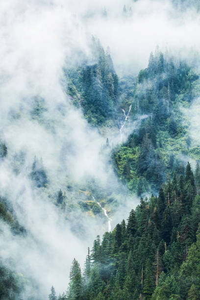 Scenic views of the Great Bear Rainforest with mist and low cloud:スマホ壁紙(壁紙.com)