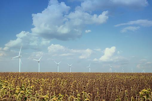 ひまわり「Scenic View Of Wind Turbines In Sunflower Field」:スマホ壁紙(3)