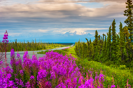 flower「Scenic view of the Glenn Highway and Mt. Drum in summer, Southcentral Alaska, USA」:スマホ壁紙(12)