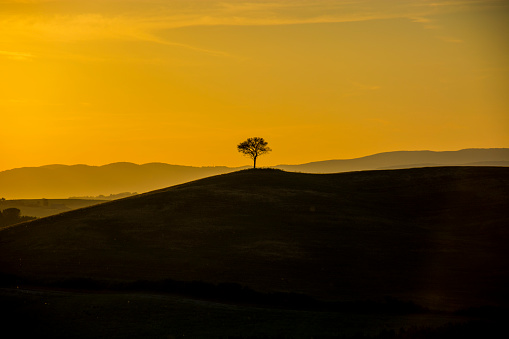 Solitude「Scenic view of single tree on hill during sunset」:スマホ壁紙(11)