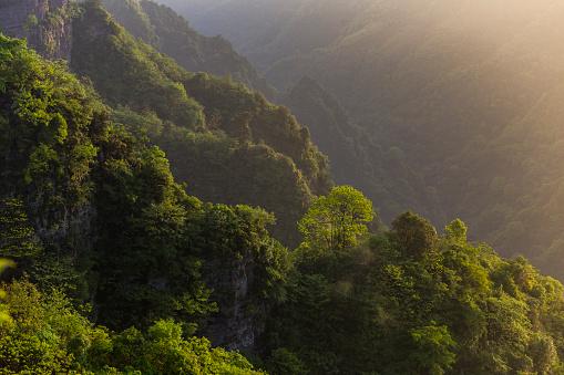 春「美しい森の空からの眺め」:スマホ壁紙(11)