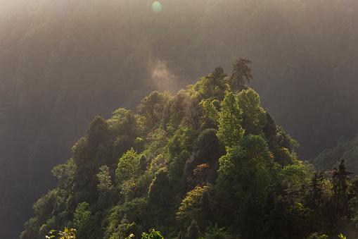 春「美しい森の空からの眺め」:スマホ壁紙(15)