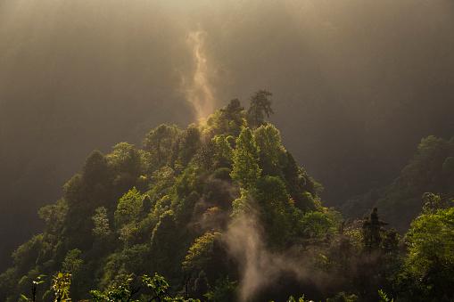 春「美しい森の空からの眺め」:スマホ壁紙(10)