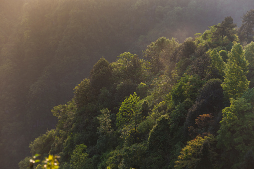 春「美しい森の空からの眺め」:スマホ壁紙(14)