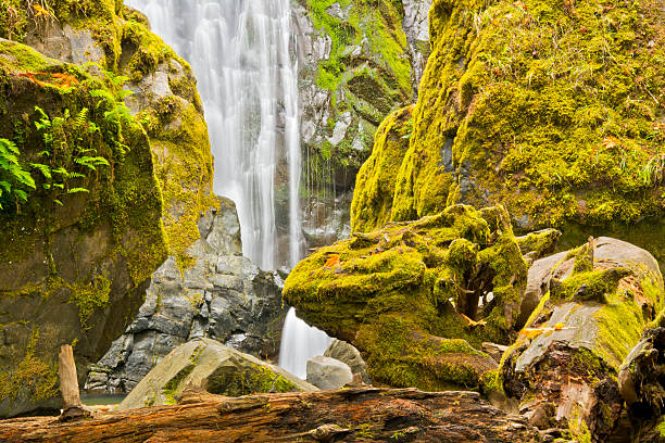 Scenic view of Susan Creek Falls, Umpqua National Forest, Oregon, USA:スマホ壁紙(壁紙.com)