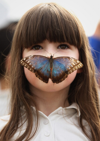 Nose「Hundreds Of Tropical Butterflies Displayed At The New Natural History Museum Exhibition」:写真・画像(17)[壁紙.com]