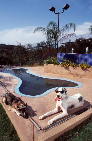 Guest「Luxury Ranch For Dogs」:写真・画像(12)[壁紙.com]