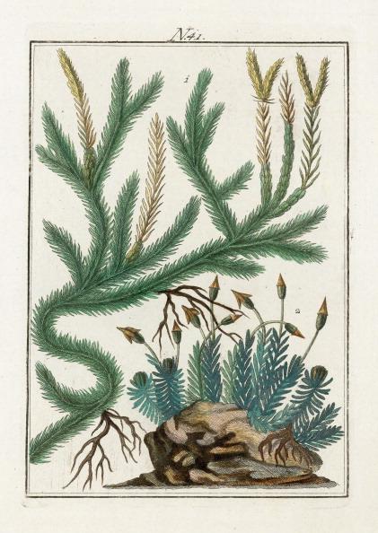 Variation「Various Mosses. From Die Welt In Bildern. Band 3. Baumeister. Vienna. 1790.」:写真・画像(10)[壁紙.com]