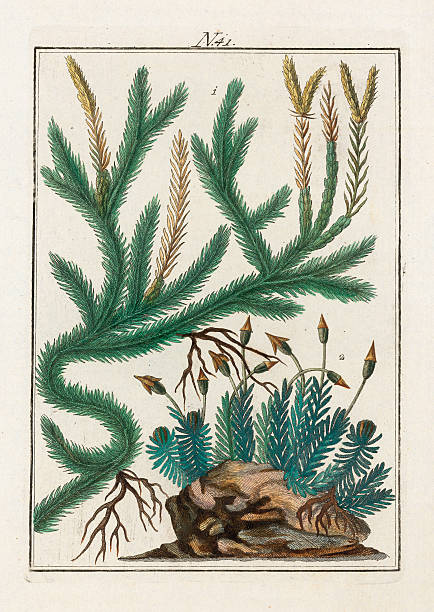 Various Mosses. From Die Welt In Bildern. Band 3. Baumeister. Vienna. 1790.:ニュース(壁紙.com)